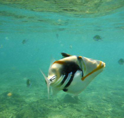 Snorkelen in Unawatuna