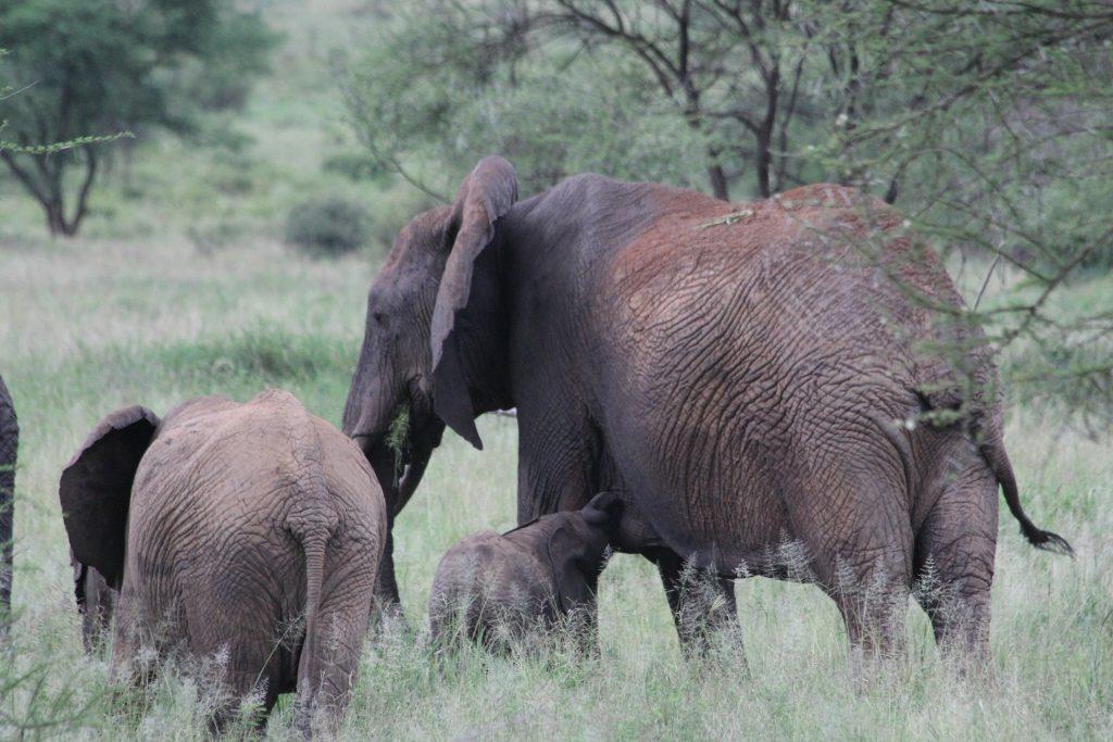 Tanangire National Park - Reisroute Tanzania