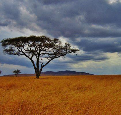 Serengeti - Reisroute Tanzania1