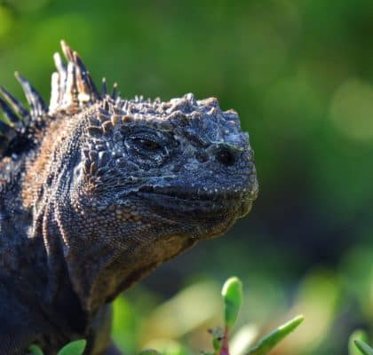 SantaCruz Ecuador Galapagos reisroute