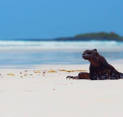 Tortuga Bay Galapagos Reisroute
